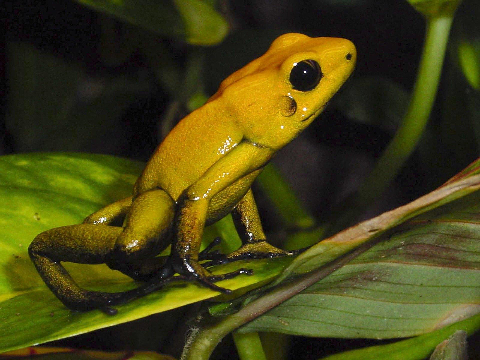 amphibians-4085907_1920